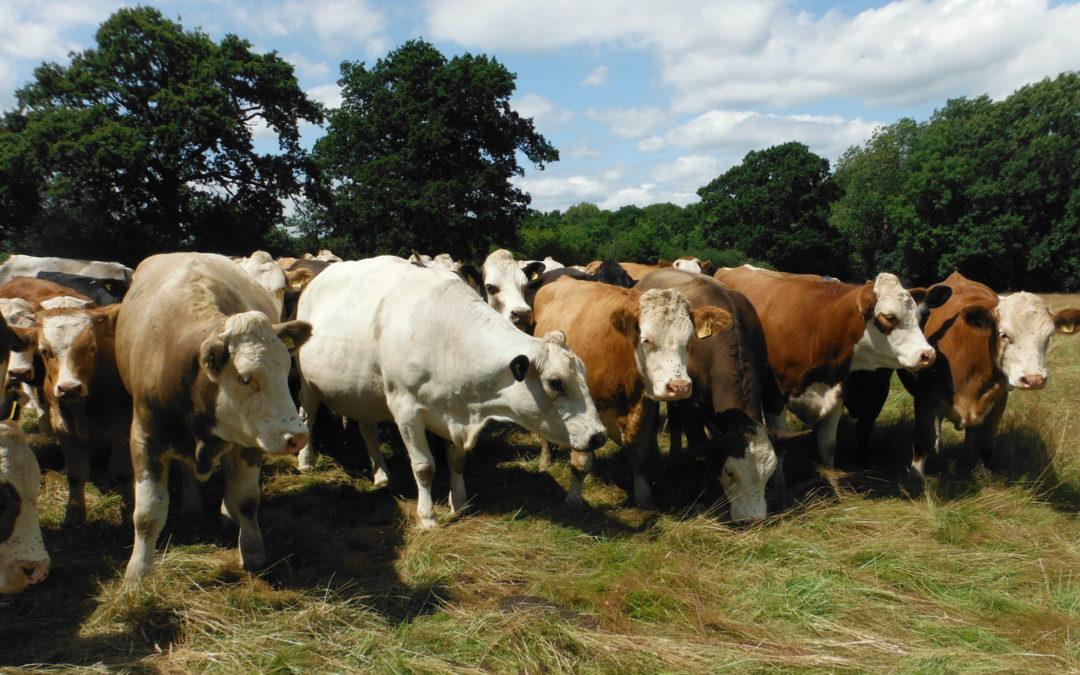 Daylands Farms